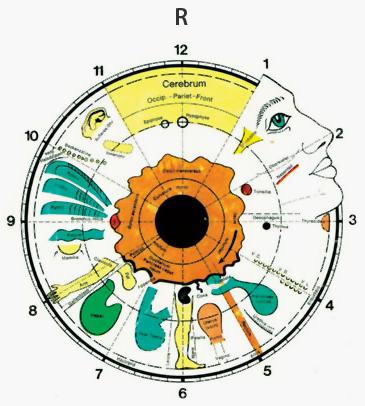 Irisdiagnose Potsdam